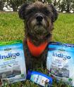 PetSafe indigo Dog Treats Up to 20% OFF