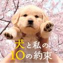 对它而言,你就是全世界—狗狗与我的十个约定
