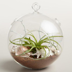 Hanging Live Plant Glass