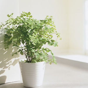 Walmart: Live Plants Starting from $8.25