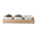 Opps White Ceramic Square Succulent/Cactus Plant Pot 3pk