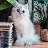Petco 超便宜猫咪用品 凑单好物