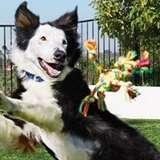 PETCO: Dog Fetch a Fun Time