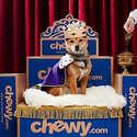 Chewy: 精选宠物用品食品玩具等每日精选 $0.99起