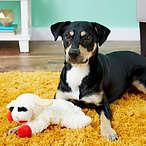 Multipet 小羊造型狗狗玩具