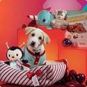 PETCO: Petco Holiday Shop
