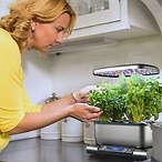 室内水培香料种植器