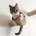 Petco 墙壁猫窝、猫爬架、猫跳板等热卖
