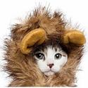 Petco 精选宠物万圣节服饰、玩具等促销热卖