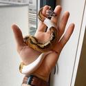 PETCO: Live Reptiles