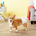 All Kind 狗狗训练尿垫、尿布、卫生巾促销